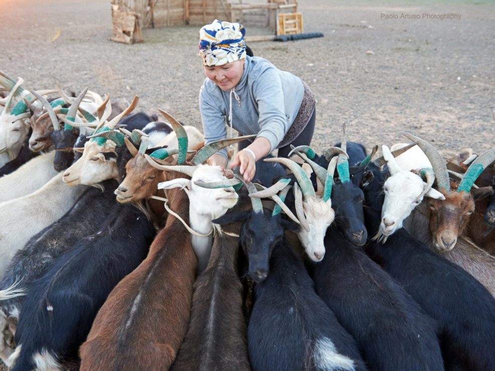 Gobi, Mongolia